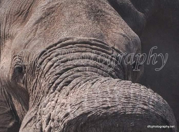 Elephant_0086