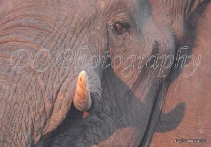 Elephant_0207