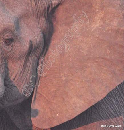 Elephant_0217