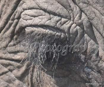 Elephant_0320
