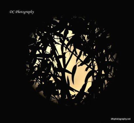 Moonset_0007