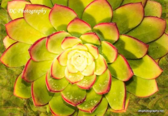 Succulent_7232