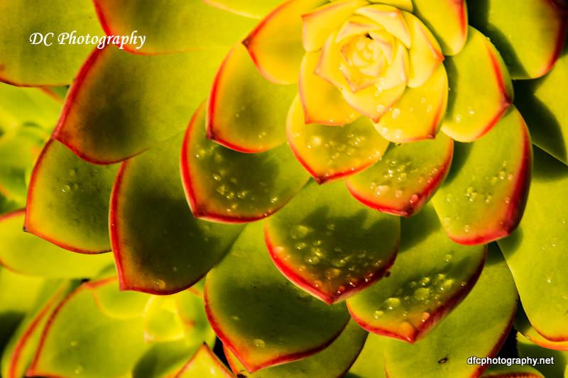 Succulent_7228