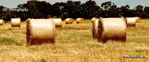harvest8_0194