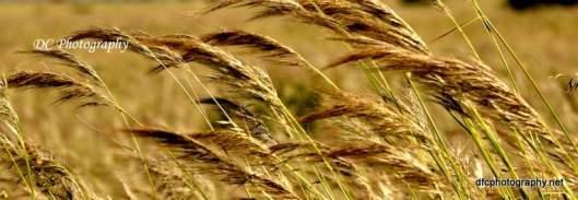 harvest8_0207