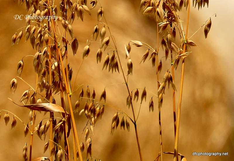 oats_0182