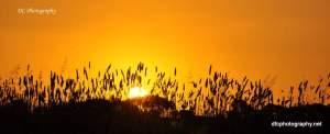 Geelong Sunset 2017_0172
