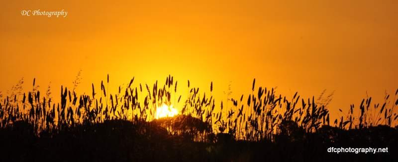 sunset_bb800_0172