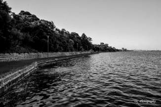 Griffin-Gully_Nroth-Shore_bw_8763