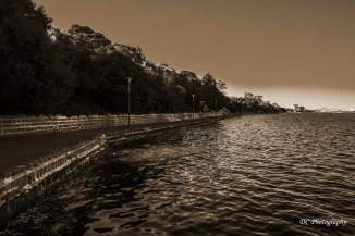 Griffin-Gully_Nroth-Shore_sepia_8762